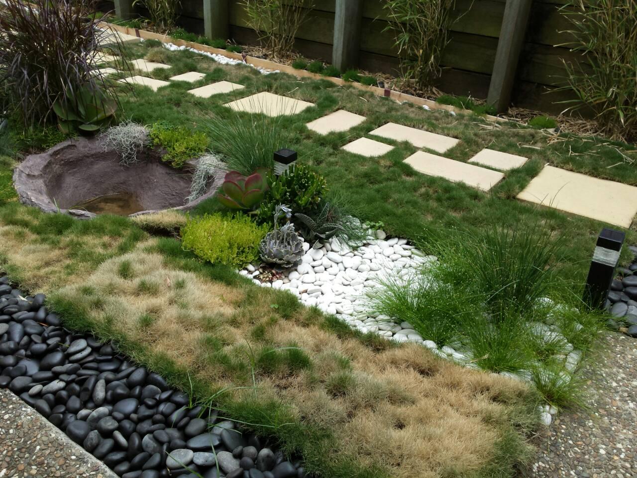 Zoysia Tenuifolia – No Watering Experiment