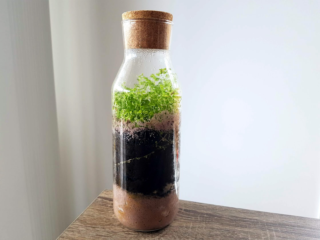 plant in a closed bottle